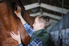 Young boy is grooming the horse Royalty Free Stock Photos