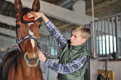 Young boy is grooming the horse