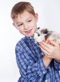 Young boy with guinea pig Stock Image