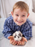 Young boy with guinea pig Stock Photos
