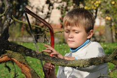 Young boy with handsaw. Young boy sawing a tree branch with handsaw in a garden Royalty Free Stock Image