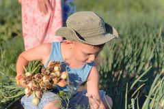 Young Boy Harvesting Green Onions at the Farm Royalty Free Stock Photo