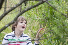 Young boy harvesting green peas. On summer forest stock photos