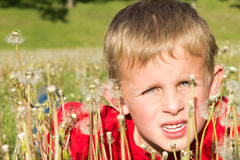 Young Boy Hiding in Dandelions Royalty Free Stock Photo