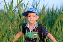 Young boy hiding in fresh green reeds Royalty Free Stock Photos