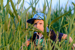 Young boy hiding in fresh green reeds Stock Photos