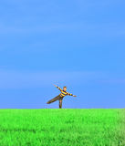 Young boy with his arms wide open. On grass Royalty Free Stock Image