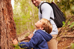 Young boy and his father walking through a forest stock photos