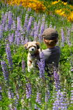 Young Boy with His Puppy. A young boy holding his puppy, walking away through a field of wildflowers wearing a flat cap Royalty Free Stock Photo