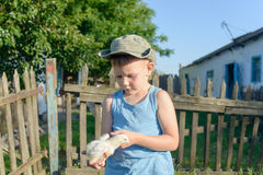 Young Boy Holding His Chick While at the Garden Stock Photos