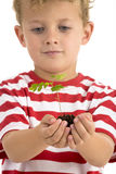 Young boy holding plant Stock Photography