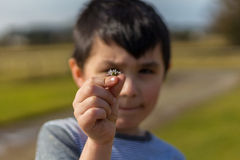 Young Boy Holding Small Daisy Up to Camera Stock Photos