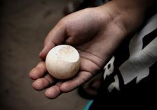 A young boy holding a turtle egg stock photography