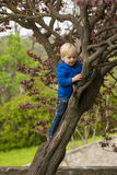 Young boy hugging a tree branch Royalty Free Stock Images
