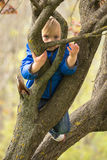 Young boy hugging a tree branch Royalty Free Stock Image
