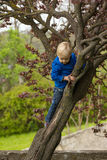 Young boy hugging a tree branch Royalty Free Stock Photos