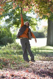 Young boy jumping to touch autumn leaves in tree Stock Images