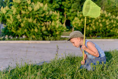 Young Boy Kneeling on Lawn with Bug Net Stock Images
