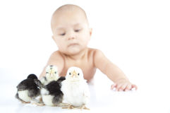 Young boy laying and looking at chickens.GN Stock Image
