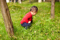 Young boy learn nature Stock Photography