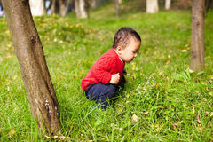Young boy learn nature Royalty Free Stock Image