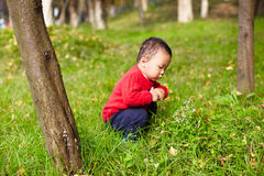Young boy learn nature Royalty Free Stock Photos