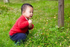 Young boy learn nature Royalty Free Stock Photography