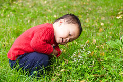 Young boy learn nature Stock Image