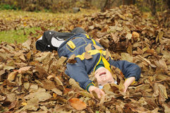 Young boy in leaves Royalty Free Stock Photography