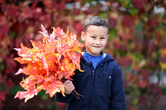 Young boy with leaves in the park Royalty Free Stock Photography