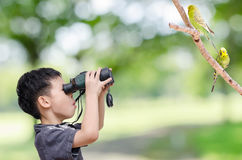 Young boy looking birds in forest Stock Photography