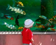 Young boy looking at fishes Stock Photography