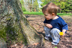 Young Boy Looking at a Tree Stock Images
