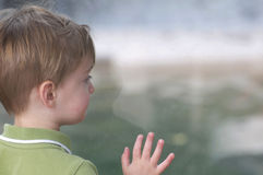 Young Boy Looking Through Window. A young white boy looks through a window at the Denver Zoo Royalty Free Stock Photo