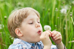 Young boy in meadow blowing on dandelion seeds Stock Photos