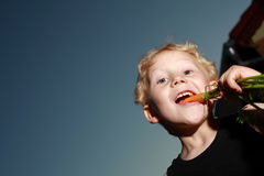 Young boy munching a carrot Royalty Free Stock Photos
