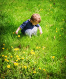 Young Boy Outside Pointing to a Dandelion Flower stock photos