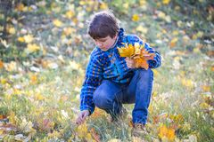 Young boy on park collect the bouquet with yellow leaves. Young boy on autumn park collect the bouquet with yellow leaves, empty space for text stock photography