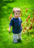 Young Boy at the Park Holding a Dandelion Flower Royalty Free Stock Photos
