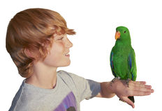 Young boy with parrot Stock Image