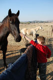 Young Boy Patting Pet Horses stock photography
