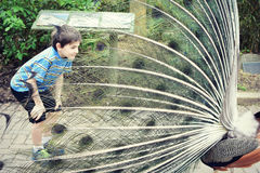 Young Boy and a Peacock. A young boy engaging with a male peacock with all his feathers spread at the Cincinnati Zoo in Cincinnati, Ohio stock photo