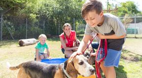 Young boy petting dog in animal shelter Stock Images