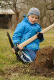 Tree stump digging Stock Photography