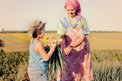 Young boy picking onions with his grandmother Stock Photos