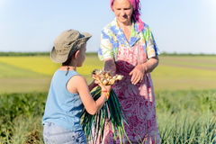 Young boy picking onions with his grandmother Royalty Free Stock Images
