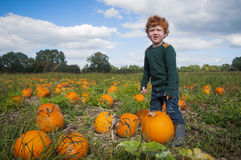 Young boy picking a pumpkin Stock Photos