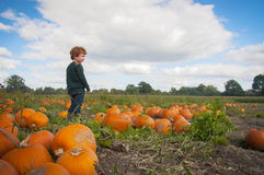 Young boy picking a pumpkin Stock Photography