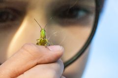 Young boy play with grasshopper Stock Photography