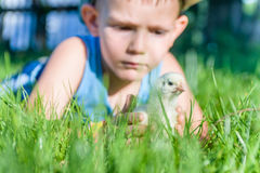 Young Boy Playing with Chick in Long Grass Royalty Free Stock Photo